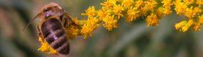 Nautrgarten - Bienen und Blüten