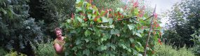 ... reiche Bohnenblüte im Naturgarten