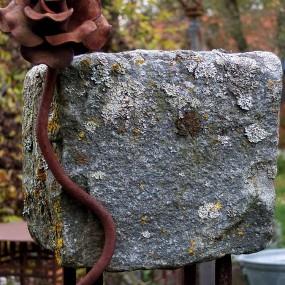 Steinranker mit Eisenrose …