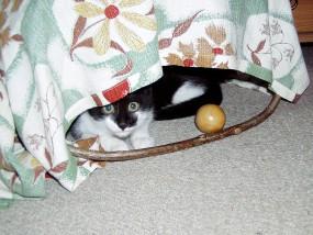 … Verstecken spielen ist schön!