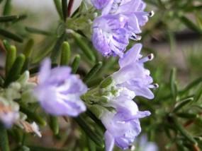 """Zarte Blüten – es sind """"Hunderte"""" …"""