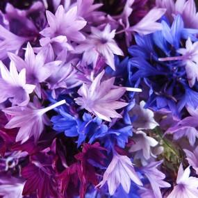 Kornblumenblüten, aber bitte ungespritzt …