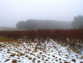 Birken im Februar 2013