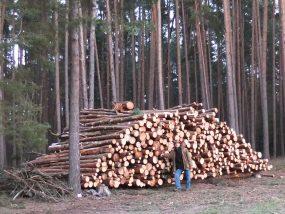 ... und Brennholz