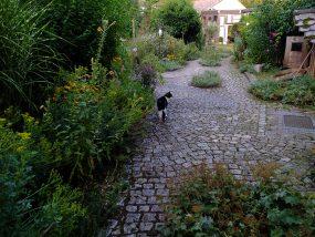 Gartenführung am 28. Juli 2019 im Hortus natura et cultura