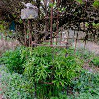 Set Pflanzenstütze rund Basis und Aufsatz