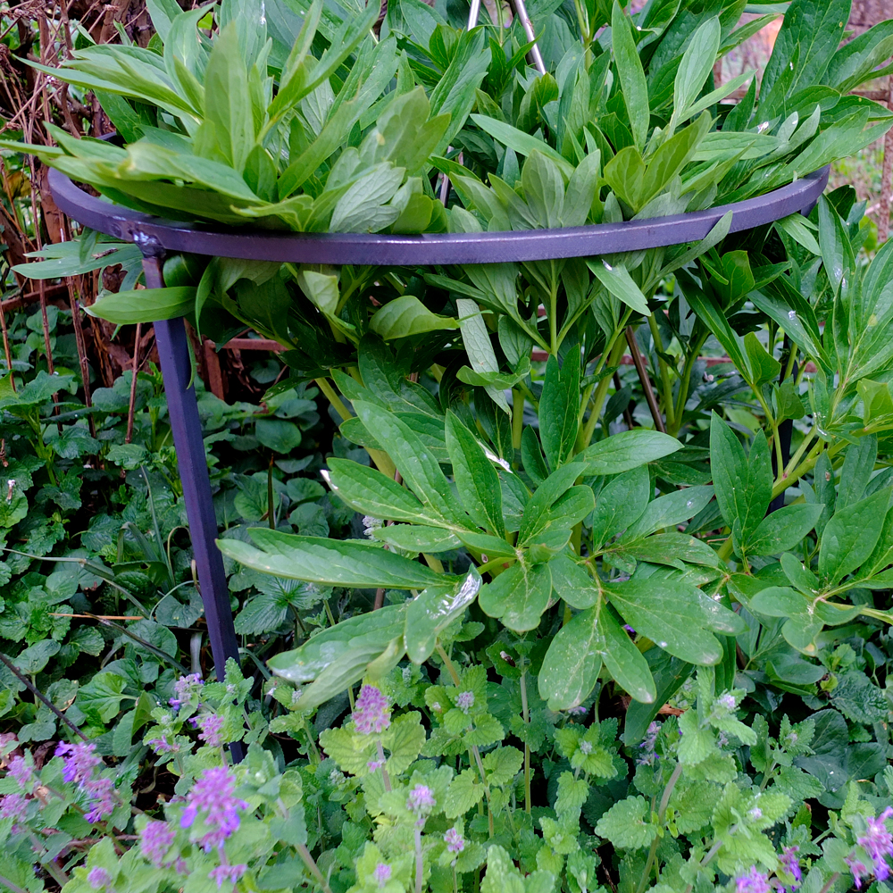 Pflanzenstütze rund Basis